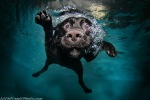 Under water dog photography by Seth Casteel